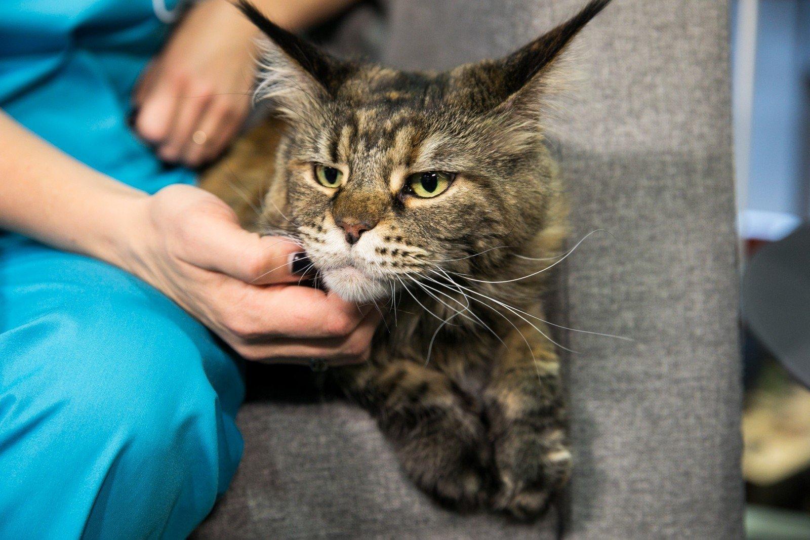 katės savininkas pažintys pažintys kuri turi gf
