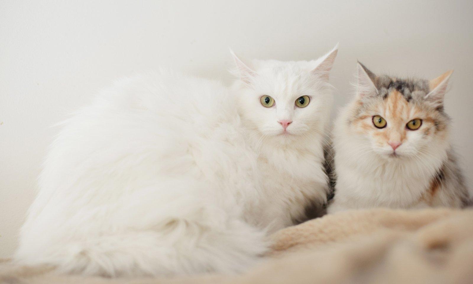 katės savininkas pažintys miestas greitasis pažintys herberstein nuotraukos